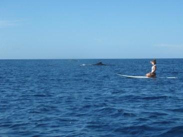 Rachel and humpback whales